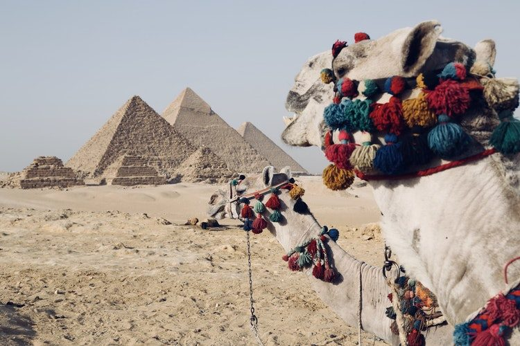 Two Camels in front of pyramids in Egypt