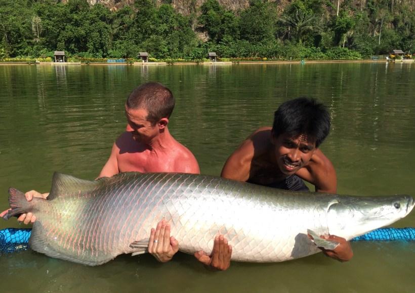 arapaima exotic fishing thailand