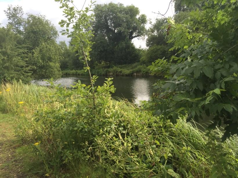 river lea in hertfordshire