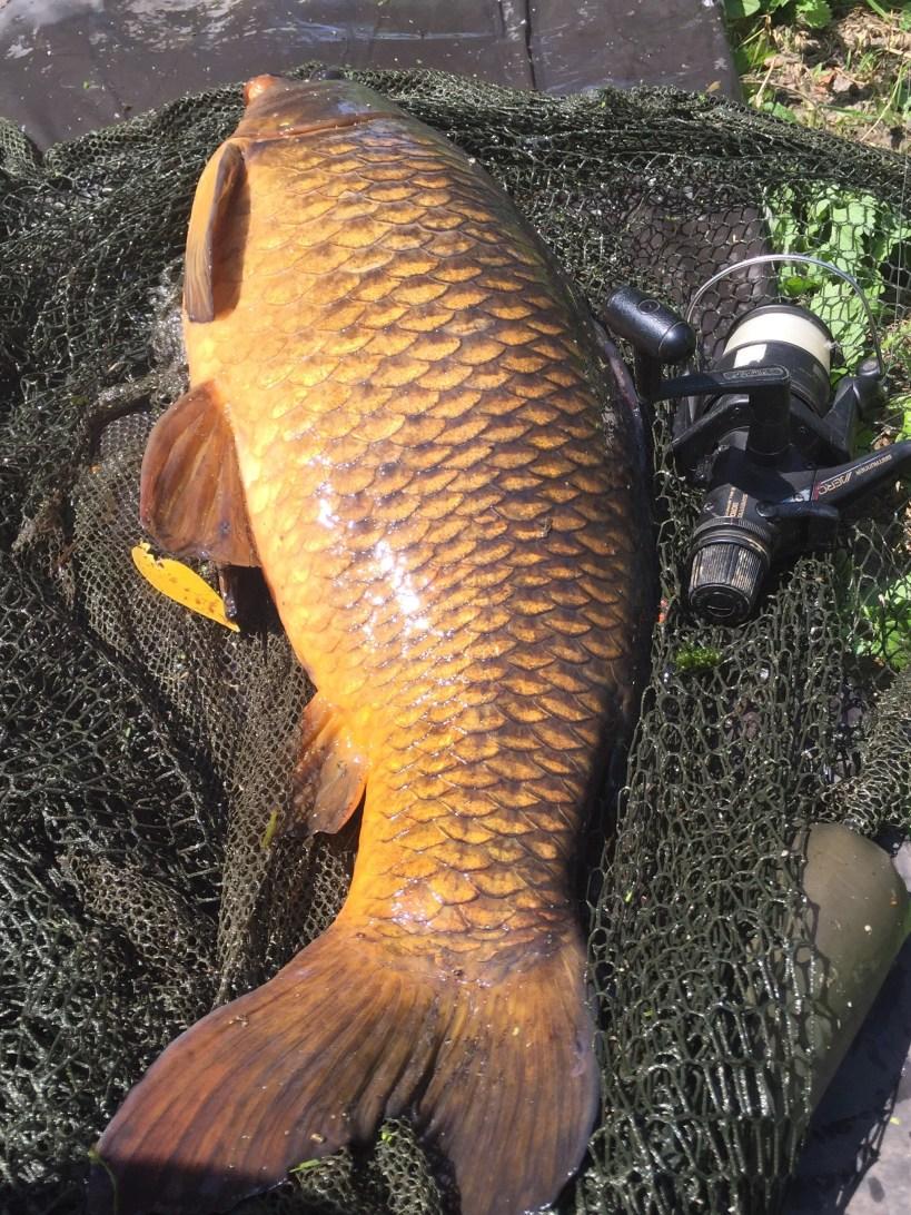river carp fishing