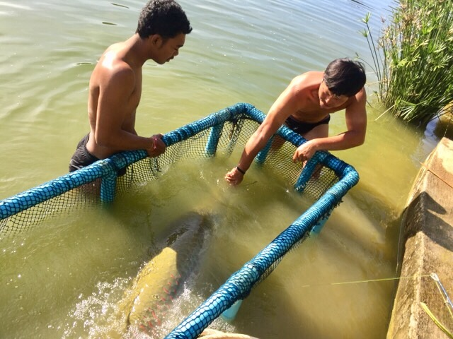 Arapaima Fishing