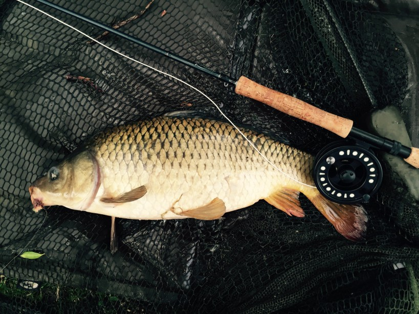 carp fishing on a fly rod