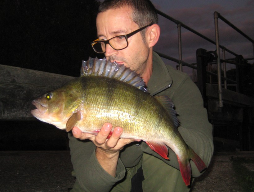 Big perch river stort