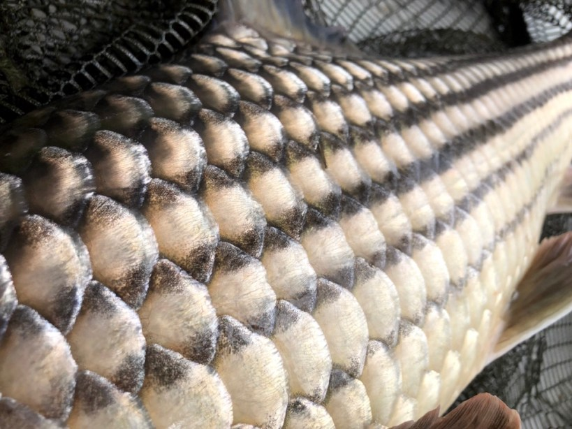 carp fishing thailand