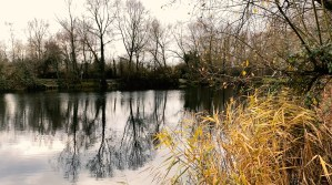 Carp Lake Hertfordshire