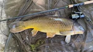 Carp Fishing in Essex