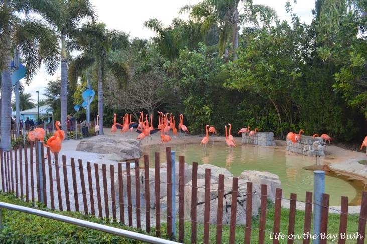SeaWorld Orlando Flamingos