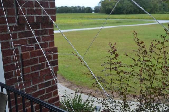 string-spider-web