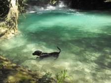 Maya loves the water!