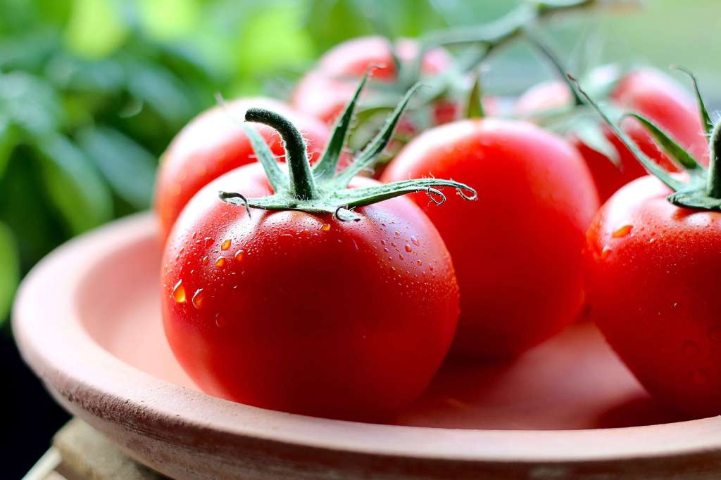 Tomatoes - Vegetable Gardening Tips