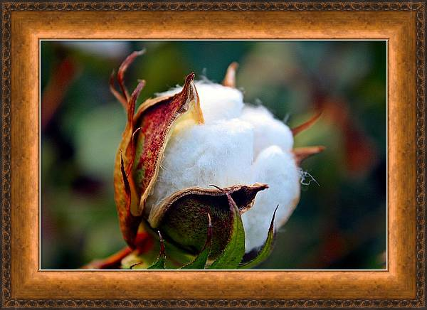 Cotton Bloom Wall Art