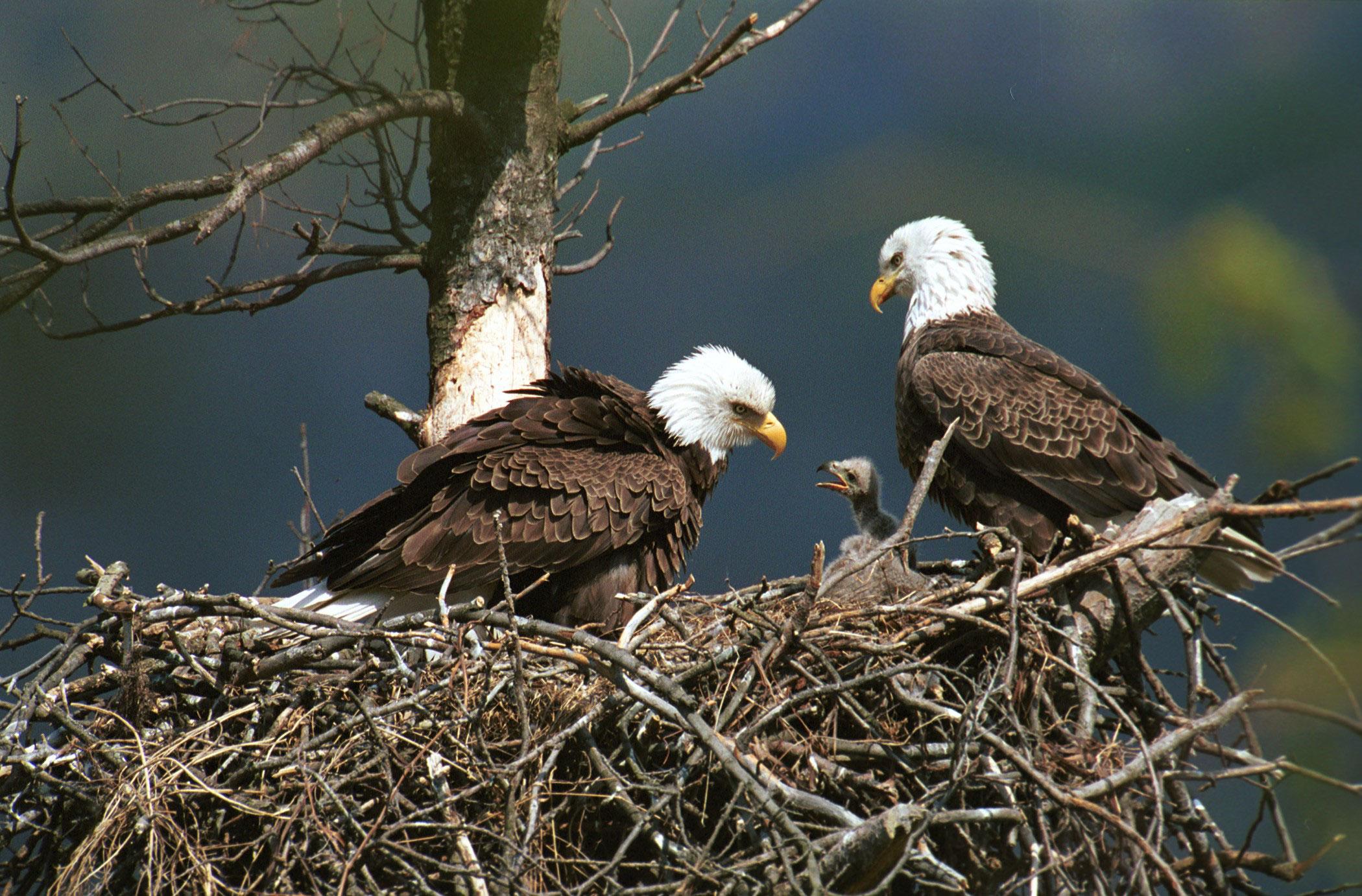 Image result for eagle's nest