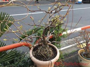 盆栽の魅力を聞いて自問自答する【日刊LR】Vol.22