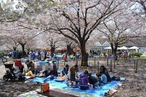 散りゆく桜の下でお花見BBQをやってきました!