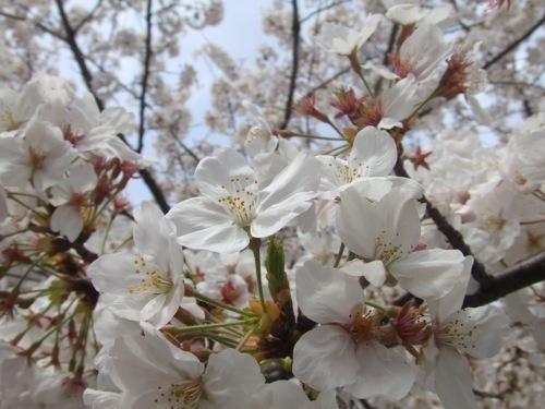 今年の花見はどこに行く? 都内でオススメの花見スポット5選+花見BBQが出来る場所をご紹介!!