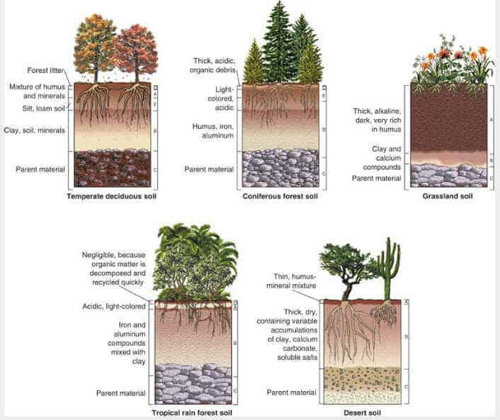 All Soil Horizons Diagram