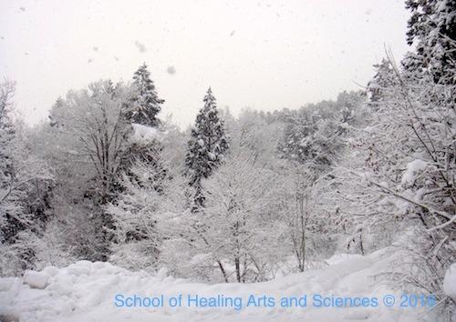 冬の飛騨の森