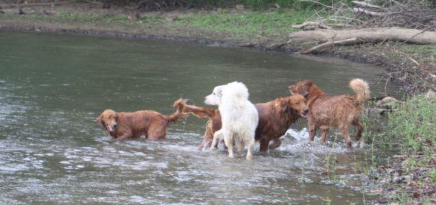 water antics canine style