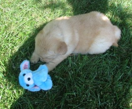 Skye meets the toy (1)