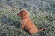23 Nov 12 8wks 6d Ben sitting handsomely