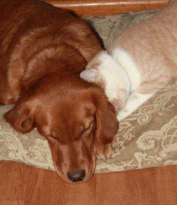 10 Nov 09 Billy Penny snuggling