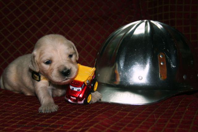 30 June 13 tiny lass and helmet