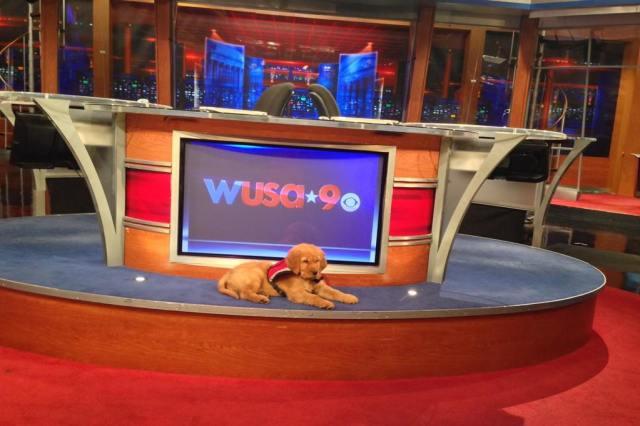 Jeremiah Newstation pup 16 Feb 16
