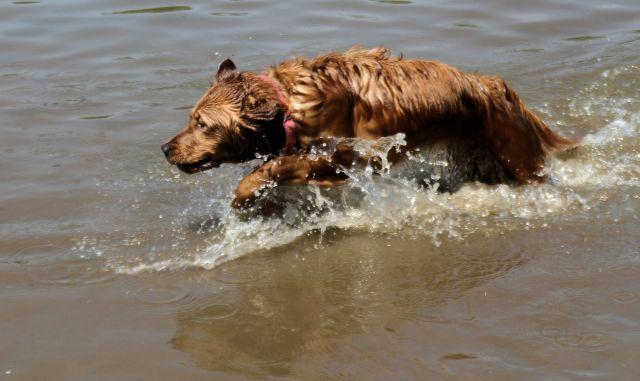 28 May 15 B Athena splashing 2