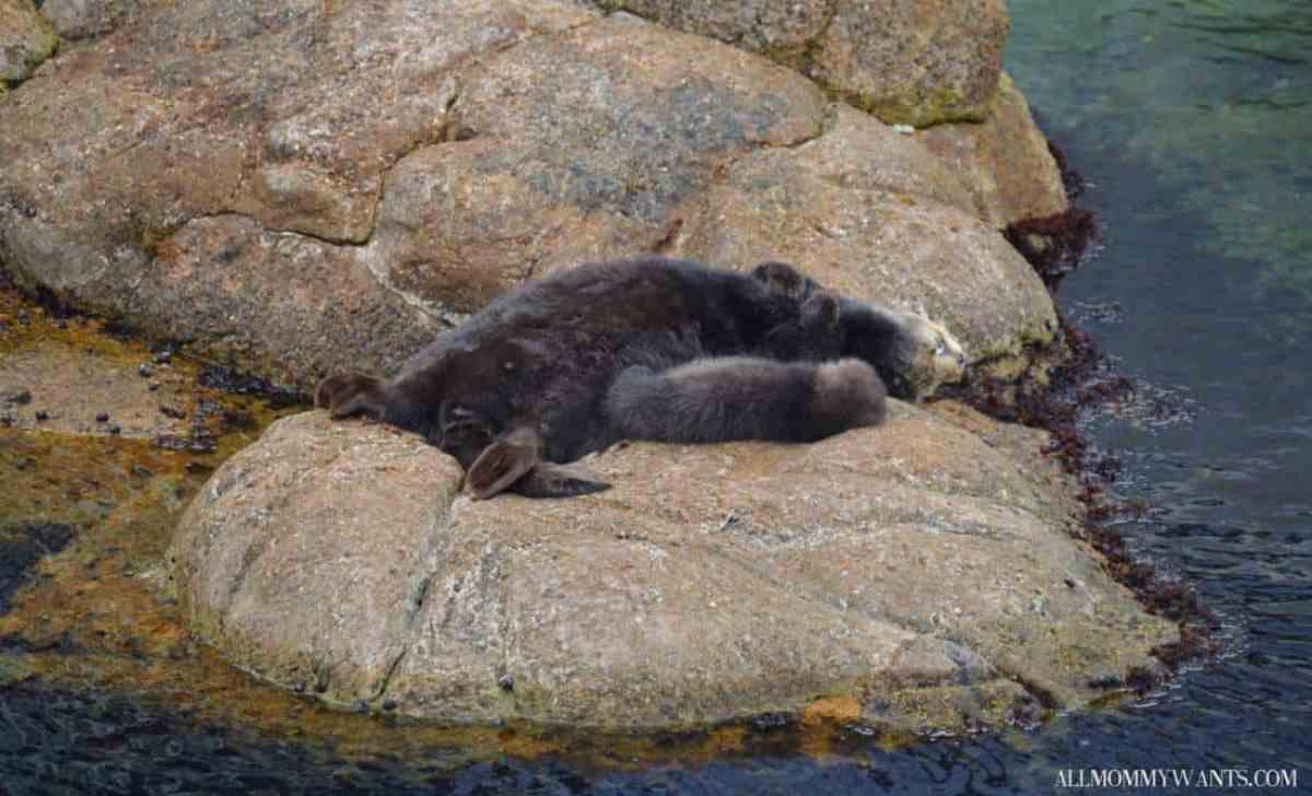 Monterey Bay Otter Baby 2