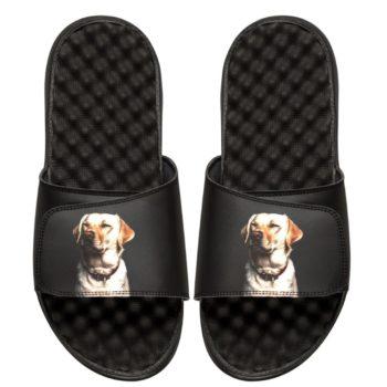DogISlides