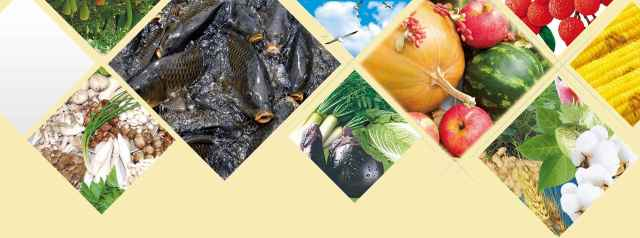 Exclusive Agro Products in Bangladesh