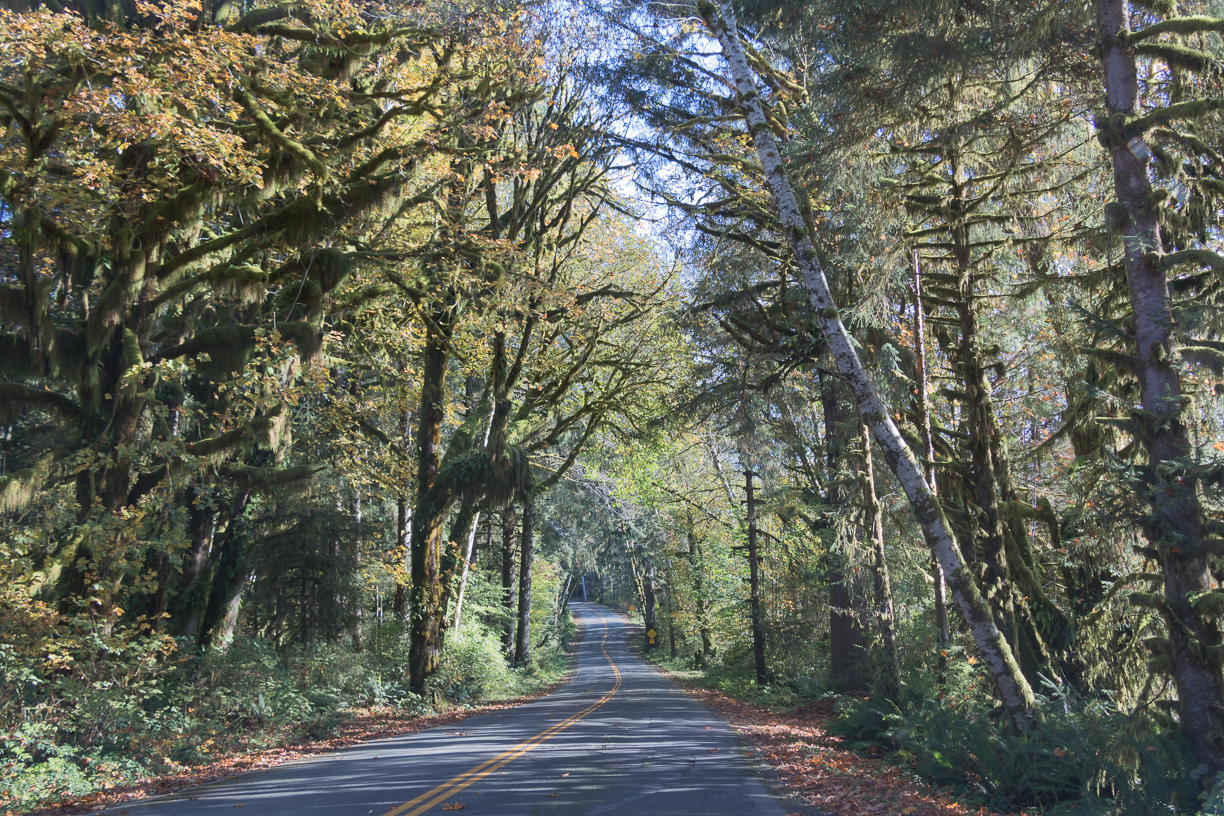 Explore lush green Hoh Rain Forest filled with ferns and moss. This is one of the top 10 things to do in Olympic National Park Photo credit: Wendy Nordvik-Carr©