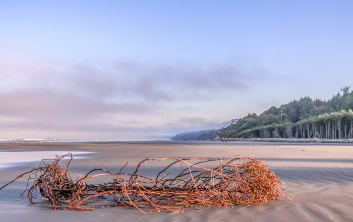 Visit spectacular Kalaloch Beach - Top things to do in Olympic National Park