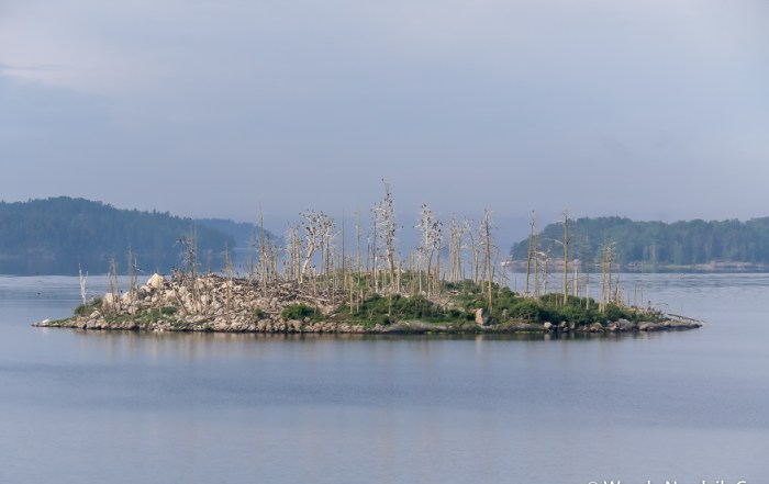 The world's largest group of islands in Archipelago National Park vary in size. The number of great cormorants have increased over the years and in some areas you can see the result of their colonization. The guano (bird poop) is destroying plant life. Photo Credit: Wendy Nordvik-Carr©