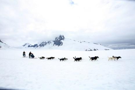 Dog sledding on a glacier near Juneau. Photo Credit: State of Alaska, Brian Adams©