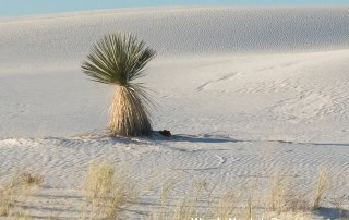 Trip planning guide to White Sands National Monument. Discover the top things to do in White Sands, New Mexico. Explore the stunning, pristine white sand dunes of White Sands National Monument. Photo Credit: Wendy Nordvik-Carr©
