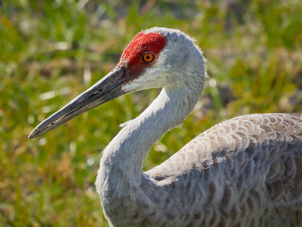 The Willcox area has more bird species than anywhere else in North America.