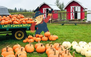 Pumpkin Patch Guide to Metro Vancouver includes Laity Pumpkin Patch in Maple Ridge. Photo Credit: Wendy Nordvik-Carr©