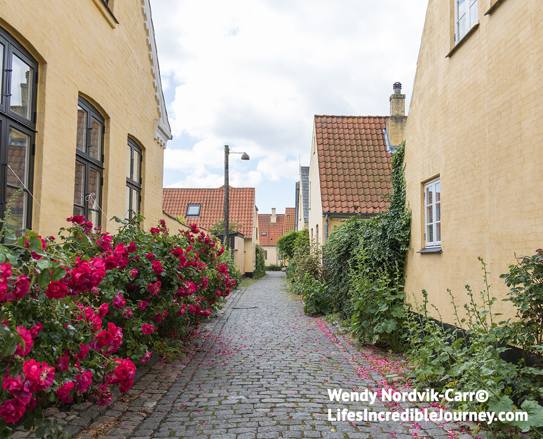 Roses and hollyhocks bloom along the narrow cobblestone streets and passageways in Dragør, one of the best preserved towns in Denmark. Photo Credit: Wendy Nordvik-Carr©