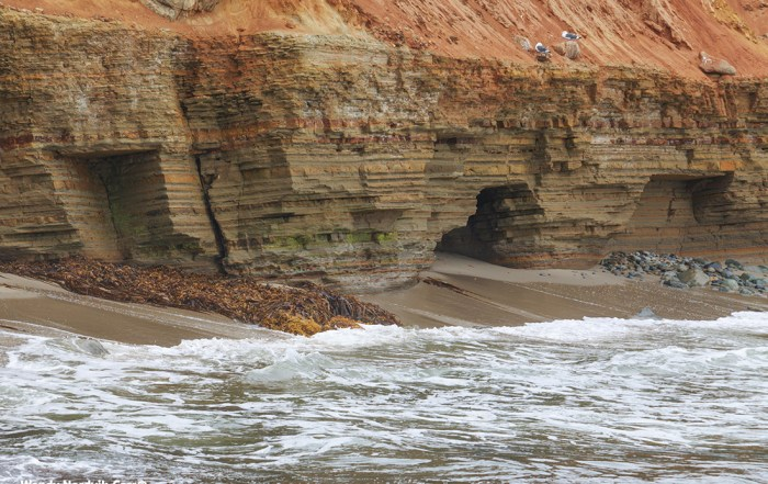 The San Diego area boasts some of the most stunning sandstone cliffs on the west coast. Harsh ocean winds peel away the layers to expose a background of natural shades of orange and brown earth tones at Cabrillo National Monument. Photo Credit: Wendy Nordvik-Carr©