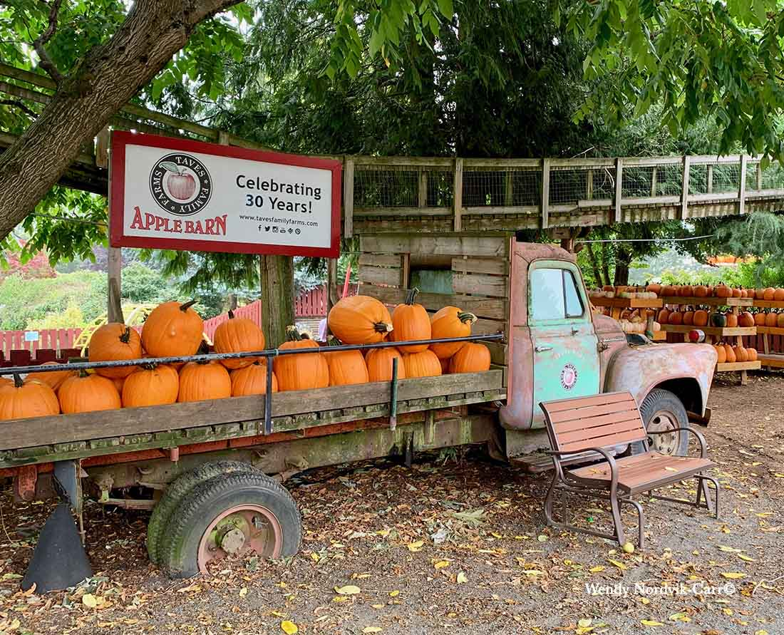 Taves Applebarn celebrates 30 years - Pumpkin Patch Best fall activities