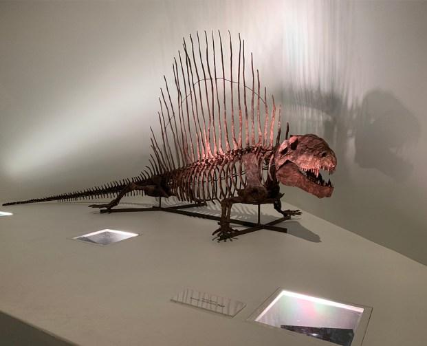 The prehistoric Dimetrodon is often mistaken as a dinosaur. Photo Credit: Wendy Nordvik-Carr©