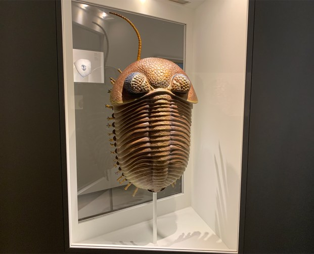 Houston Museum of Natural Science a trilobite dating from about 540 million years ago. Photo Credit: Wendy Nordvik-Carr©