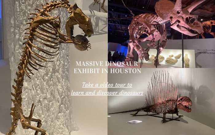 Video tour - Discover Dinosaurs at the massive dinosaur exhibit at the Houston Museum of Natural Science.