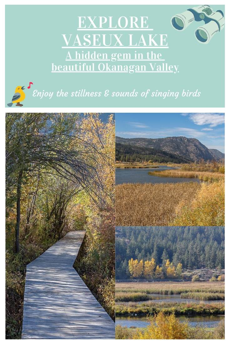 Explore Vaseux Lake Bird Sanctuary