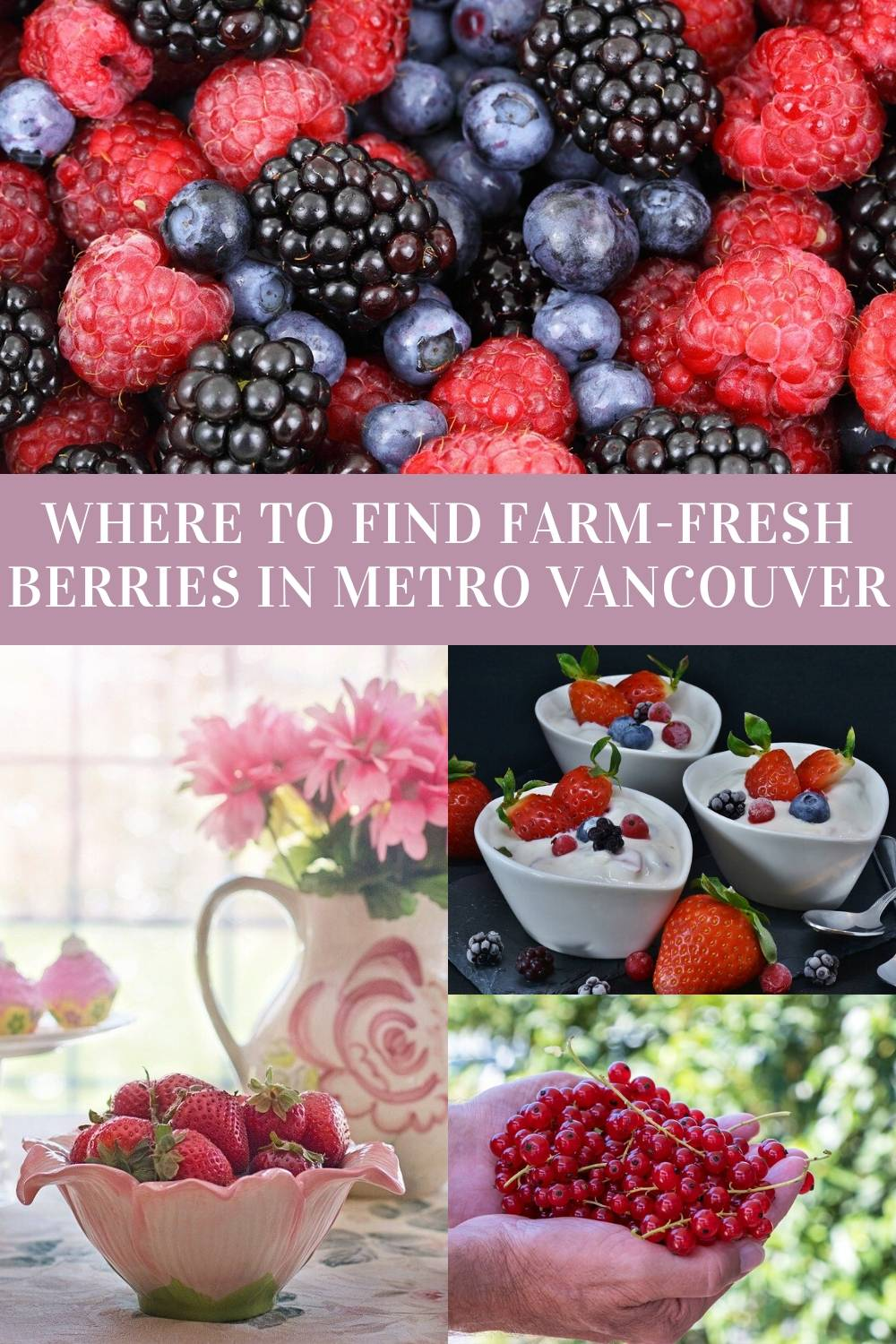 Berry Season: Where to buy summer berries in Metro Vancouver