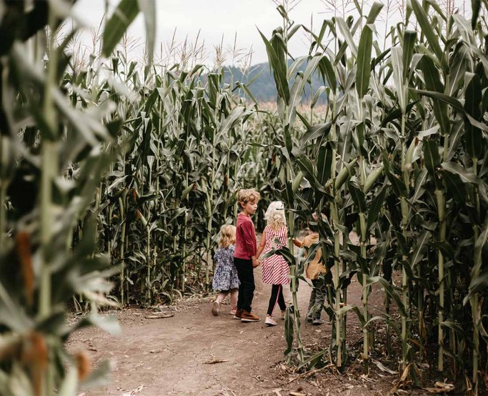 Children enjoying the Chilliwack Corn Maze Photo: Julie Christine Photography