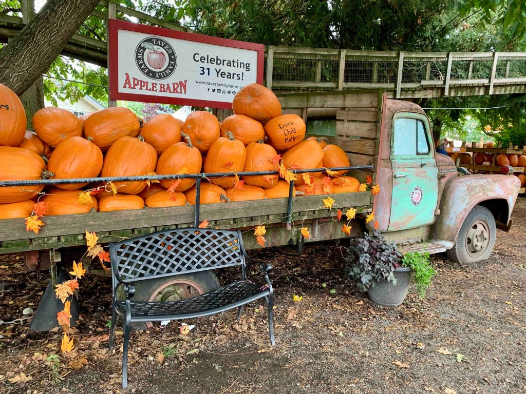 Taves Family Farms Applebarn celebrates 31 years with fun-filled fall activities including a Pumpkin Patch and a Corn Maze. Photo: Wendy Nordvik-Carr©