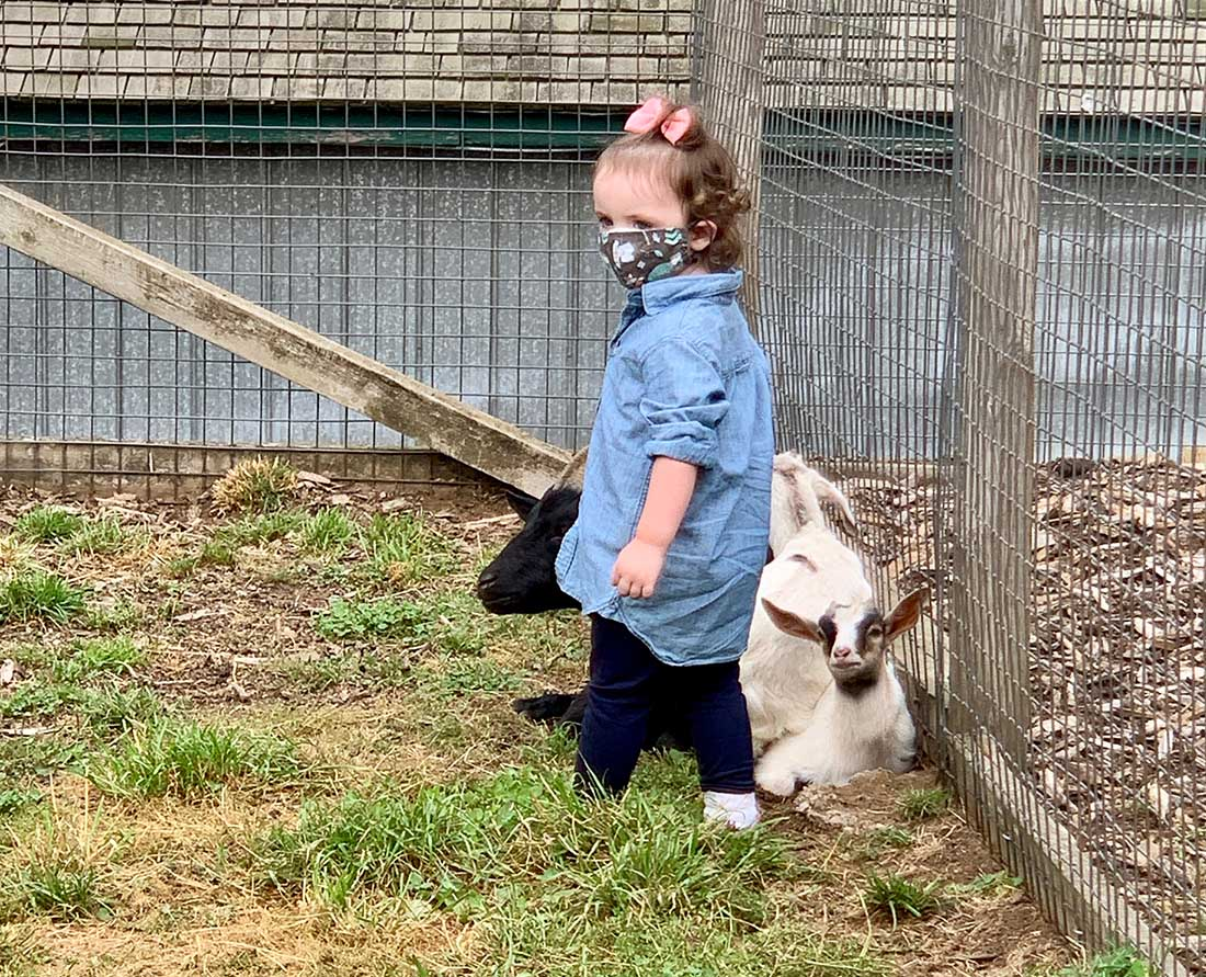 A toddler wears a mask to visit goats at the petting barn at Taves Family Farms Applebarn.