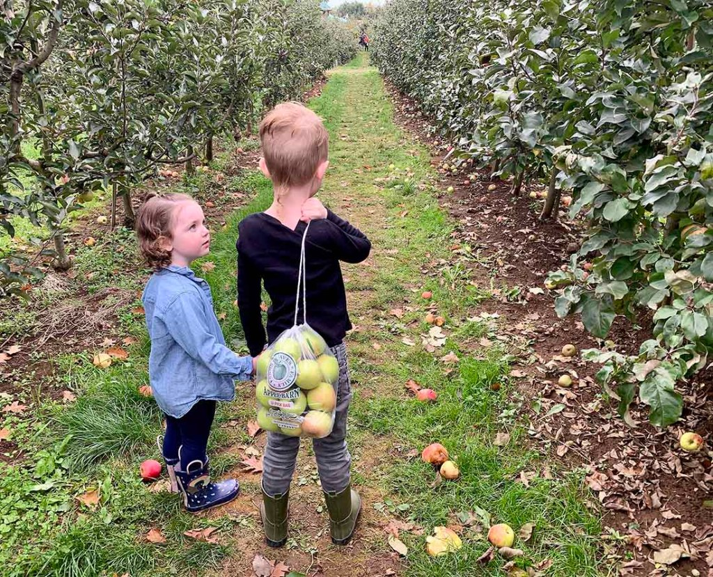 U-Pick Apples at the Pumpkin Patch at Taves Family Farms. Photo: Wendy Nordvik-Carr©